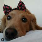 dog Lôla