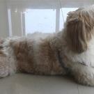 dog Hóspede: Bobby - Mamãe: Isabella