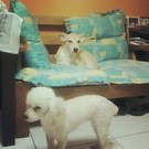 dog princesa e Dolly