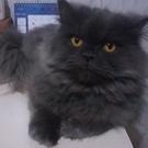 cat Romeo